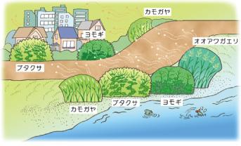 図:身近な植物の花粉